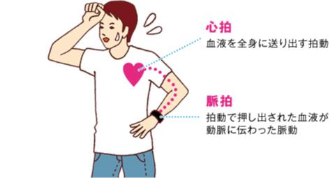 心拍 数 脈拍 数 違い 心拍数と脈拍数は同じものになるのでしょうか? ハテナース